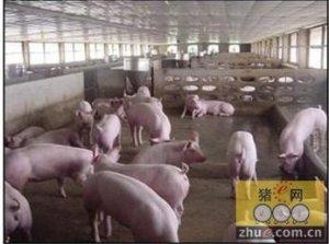 近期生猪价格持续上涨的主要原因