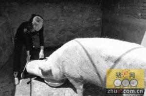 替亡夫还41万外债养猪11年没吃几口肉