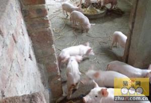 """养猪场被划为禁养区 """"老板""""起诉索退租金"""