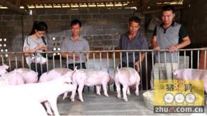 云和:原生态养猪法助猪场走出困境