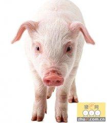 中国养猪业正处于转型升级的关键时刻