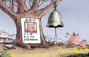 """养猪大县下""""禁猪令"""",因市长被约谈?"""