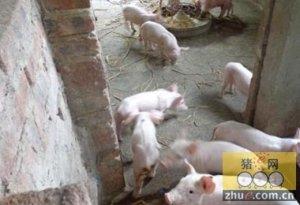 老猪舍生产效率低,必须改造才有生存空间