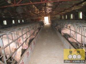 大中型养猪场在猪舍设计上存在的问题