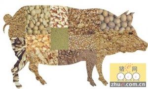 影响饲料能量利用率的因素及其营养学措施