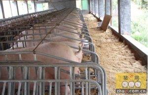 网架高床改造养猪场 年节水8万吨月省电5200千瓦时