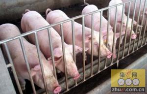 整体猪源供应紧张 屠