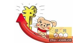金华市生猪价格行情转为持续回升