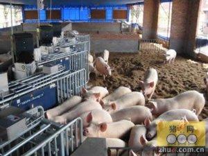 生猪养殖场的常规消毒