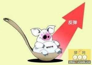 辽宁葫芦岛市生猪价格走出20个月的低谷期