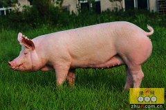 一个养猪倌打造的农村创业样板