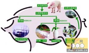 进一步加强病死猪无害化处理监管工作六条措施
