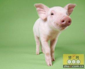 百万头美味猪现代养殖产业化项目落户怀远