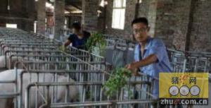 残疾人田贵和创办养猪场的故事