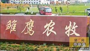 洮南市雏鹰农牧集团400万头生猪一体化项目