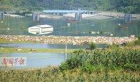 大化洪水淹死1.6万头猪 急需无害化处理