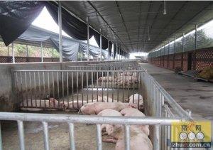 如何用石灰消毒畜禽养殖场地、圈舍