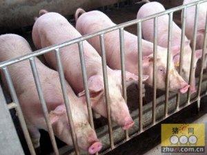 生猪出栏价连续五周反