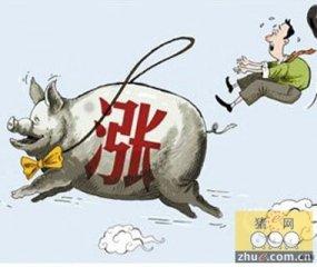 揭秘2015年国庆节前猪价行情走势