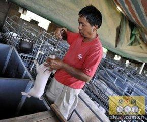 营养因素及药物对猪场疫苗接种的影响