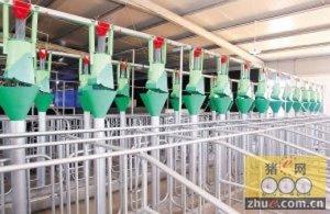 如何正确排查猪舍供水系统问题