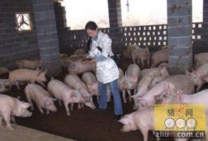一个女大学毕业生的快乐养猪路