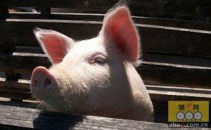 陕西省生猪养殖户开始扭亏为盈