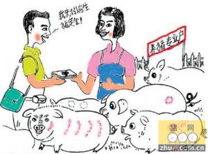 生猪与玉米批发价格比低于6:1时,保险公司按约定赔付