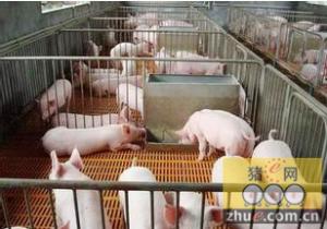 猪场保育舍建设注意事项
