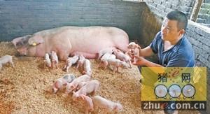 如何增加母猪的窝产仔数?