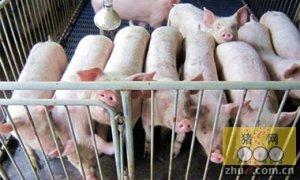 力争2020年优质猪出栏比重超70%