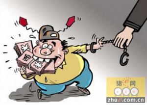 """""""小官贪腐""""不可忽视 养猪补贴你享受到了吗?"""