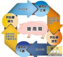 """警惕肉价上涨""""副作用"""" 地方政府要积极应对猪周期"""