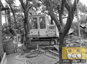 三亚吉阳41家猪棚被拆 面积8668平方米