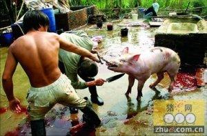 私自杀了一头猪卖 摊主面临高额罚款