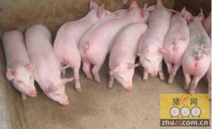 养猪专业户十诫,你要懂!