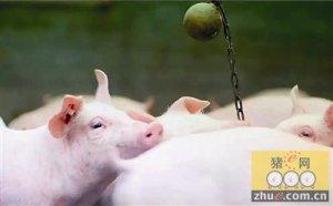 """桐乡""""零污染养猪""""登上美国《科学》杂志"""