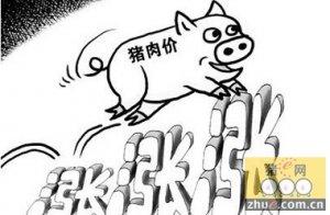 8-10月份行情大揭秘:有望冲上10元/斤!