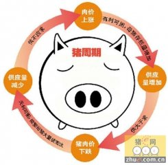 专家:如果猪周期发力 半年后或再现猪价猛跌