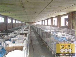 猪舍温度和气体环境控制措施
