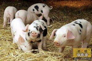 猪价下跌区域扩张,8月行情会盛极而衰吗?