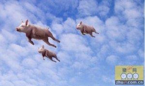 """猪价4个多月涨幅超5成 大型企业进军生猪养殖""""埋雷"""""""