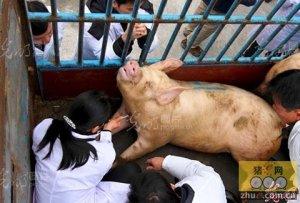 即墨市6家生猪屠宰场(点)通过畜牧和环保资格审核