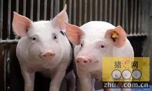 全国生猪高价区出现小幅回落