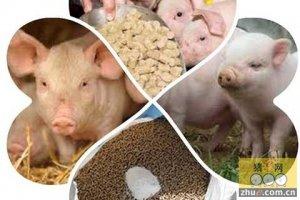 猪肉价淡季不淡 养猪户称养的多但没赚到钱