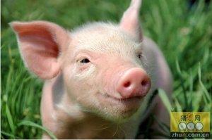 """对湖南生猪涨价的调查之一:理性看待""""猪周期"""""""