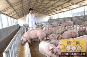 """四获""""全国生猪调出大县""""奖"""