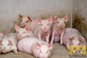 胶州村民举报企业排污 环保局:养猪场是污染源