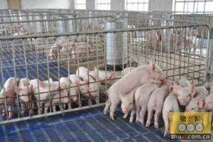 降低养猪过程中应激发生的关键