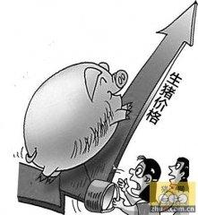 猪价行情反弹回升有迹象 短期猪价平稳长远依旧看涨